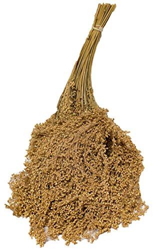 Rispenhirse 1kg lose gebündelt