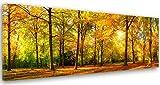 Feeby Frames, Cuadro en Lienzo, Cuadro impresión, Cuadro decoración, Canvas de una Pieza, 60x150 cm, Bosque, ÁRBOL, Naturaleza, Sol, MARRÓN, Verde