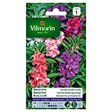 bolsa de semillas Balsamine Camelia DBL Mix Vilmorin