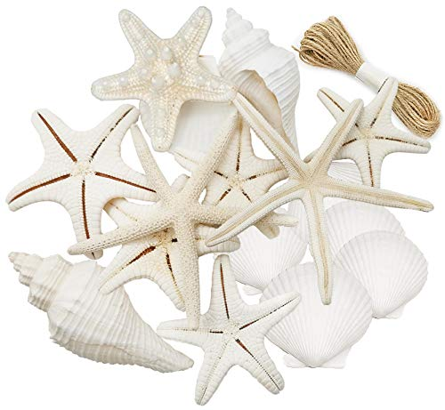 16pcs Natural White Mixed Starfish Conch Shells, Beach Starfish Decor, Perfect Starfish for Crafts, Beach Wedding Decorations,Shells for Party Decorations,Home Decoration.