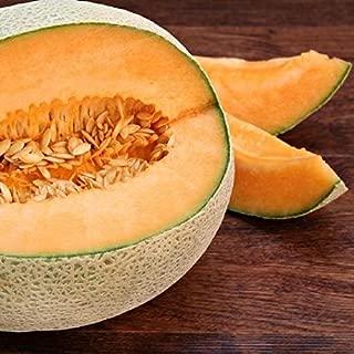 David's Garden Seeds Fruit Cantaloupe Top Mark 4421 (Orange) 50 Non-GMO, Heirloom Seeds