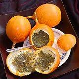 Inicio Jardín 15 Semillas Naranja Amarillo Colombia fruta de la pasión, Granada, Granadilla, Granadilla de envío dulce de semillas libres