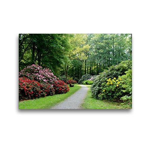CALVENDO Premium Textil-Leinwand 45 x 30 cm Quer-Format Rhododendronwald in Bad Sassendorf, Leinwanddruck von Janne