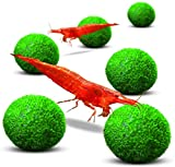 Luffy Nano Marimo Moss Balls, 0.4 Inch, Aesthetically Beautiful, Low Maintenance, Loved by Shrimps and Snails, 6 Pack