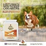Best Paw Nutrition - Prébiotiques et probiotiques pour Chiens et Chats | 100% Naturel | Apaise Les Troubles gastriques, renforce l'immunité, améliore Les selles et diminue Les flatulences #3