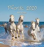 Pferde 2020 - Postkartenkalender - Sprüchekalender - Wandkalender - Tischkalender - 16x17cm - Pferdekalender