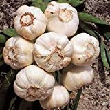 GARLIC BULB (8 Pack), FRESH CALIFORNIA SOFTNECK GARLIC BULB FOR...