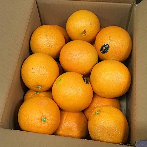 完熟 オレンジ 約3kg(14〜20玉) ネーブル バレンシア 果物 フルーツ 「北海道・沖縄は 1100円」
