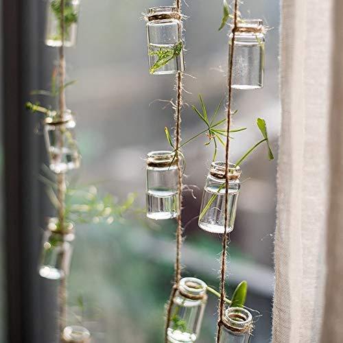Pixie hanging terrarium with air plants