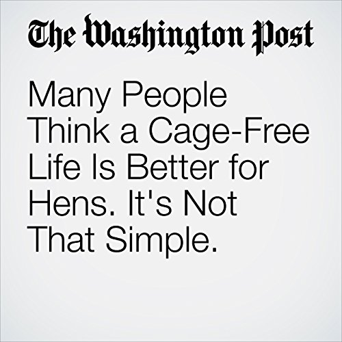 Many People Think a Cage-Free Life Is Better for Hens. It's Not That Simple. copertina