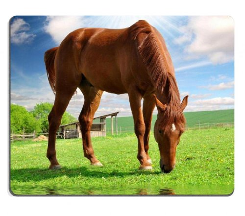 farm field horse Equine animal Mouse Pads Customized Made to Order Support Ready 9 7/8 Inch (250mm) X 7 7/8 Inch (200mm) X 1/16 Inch (2mm) Eco Friendly Cloth with Neoprene Rubber Liil Mouse Pad Desktop Mousepad Laptop Mousepads Comfortable Computer Mouse Mat Cute Gaming Mouse pad
