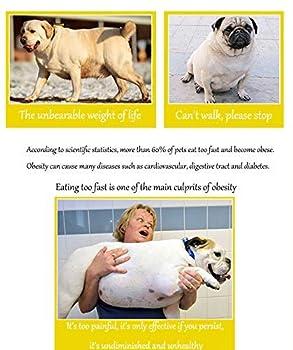 Quesuc gamelle d'alimentation lente pour chiens, Gamelle anti glouton, Peut éviter l'obésité éviter les vomissements peut être utilisé au lave-vaisselle convient aux chiens petits et moyens(960 ml)