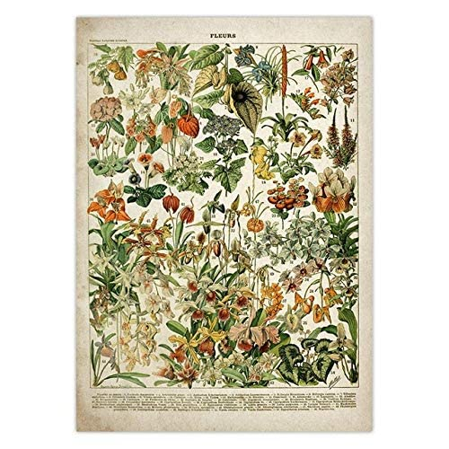 RLJHG Cuadros Decoracion Salon modernosArte de Pared botánico Poster de Flores Vintage Estampado Floral Antiguo Poster Educativo botánico Decoracion de Especies botánicas60x90cm x1 Sin Marco