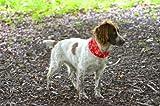 Ruffnek Halstuch für Hunde, reflektierend, gut sichtbar, mit Tatzen-Knochen-Abdruck, Rot - 5