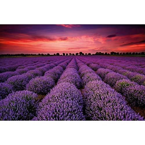 GREAT ART XXL Poster – Fotoposter Lavendel Feld – Blüten Blumen Natur Violette Landschaft lila Wandposter Zauber der Provence Wandbild Motiv (140 x 100 cm)