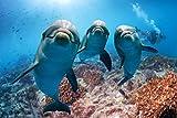 Delfine Meer Delfin XXL Wandbild Kunstdruck Foto Poster