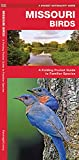 Missouri Birds: A Folding Pocket Guide to Familiar Species (Wildlife and Nature Identification)