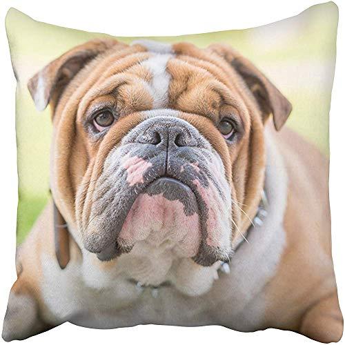 Funda de almohada de poliéster de 50,8 x 50,8 cm, diseño de perro bulldog inglés, con dibujos animados en blanco y dibujos animados, para decoración de la celebración, funda de cojín, cuadrada, impresión a dos lados para el hogar