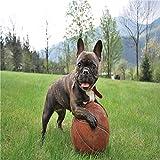 Pintura por Números,Bulldog hierba baloncesto animal,DIY Pintura al óleo Colorido Pintar Kit de,Lienzo Preimpreso de con Pinceles y Pigmento Acrílico (16 X 20 Pulgadas,Sin Marco)