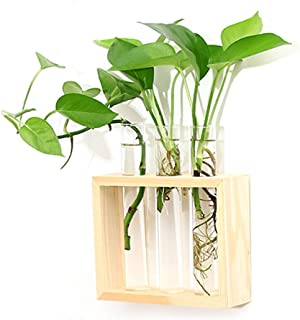 Ivolador Wall Hanging Plant Test Tube Flower Bud Vase in Wooden Stand Perfect for Hydroponic Plants Home Garden Wedding De...