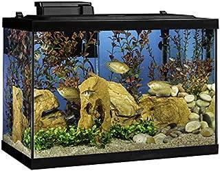 fish for 29 gallon tank