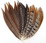 Plumas de Faisán,CHENKEE 30 pzs Plumas de faisán naturales Plumas hechas a mano Decoración Plumas marrones Bonitas plumas de Pollo DIY Plumas Suaves 30-35cm para DIY Manualidades Tocados