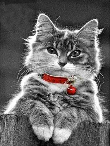 Pintura de diamante gato cuadrado diamante bordado animal rhinestone punto de cruz diamante mosaico pintura de diamante A12 60x80cm