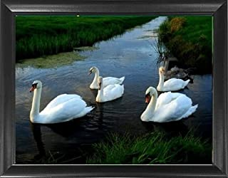 Mount Plus MP-3D-W69 Swan Framed 3D Lenticular Picture - Unbelievable Life Like 3D Art Image, Animated Posters, Cool Art Deco, Unique Wall Art Decor, with Dozens to Choose from