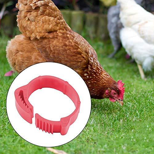 100x Geflügel Bein Bands Vogel Küken Enten Wechselrahmen Ringe Für Hühner, Enten, Hühner, Geflügel, 001-100 Digitale Markierungen, Einstellbarer Innendurchmesser 2-2,4 cm(Grün, Orange, Rot)