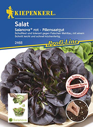 Salatsamen - Salat Salanova, rot von Kiepenkerl