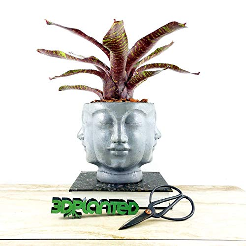 Concrete Multi Face Head Planter Natural Gray - All Seeing Buddha