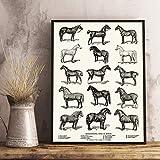 QAZEDC Leinwand Gemälde Pferderassen Arten drucken Pferdesport Kunst Poster Bauernhaus Wanddekoration, Pferd Diagramm Vintage Wall Art Leinwand Gemälde Bild 60x80cm