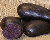 Sycamore Trading Semi di patata viola per 10tuberi...