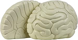 "FUBA Brain Bookends Heavy Decorative Book Ends Home Decor Suitable for Office, Home 8""x8""x5""(White)"