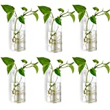 Wall Mounted Glass Terrariums Wall Hanging Planters Glass Plant Terrarium Wall Vases Plant Tubes Pack of 6