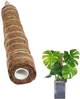 Best totem pole plant Reviews