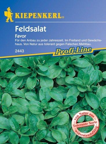 Feldsalat Favor