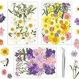 Opopark 111 Piezas Flores Prensadas Secas Reales Múltiples Flores Naturales Prensadas con 1 pinzas para Bricolaje y Manualidades Fabricación