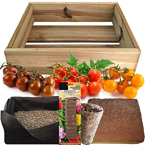No Plan B for Earth Kit de Cultivo con Maceta de Pino Tratada. Semillas de Tomates Cherry, Red Cherry, Yellow Cherry, Black Cherry