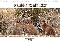 Raubkatzenkinder (Wandkalender 2021 DIN A4 quer): Bezaubernde Bilder von kleinen Raubkatzenbabies (Monatskalender, 14 Seiten )