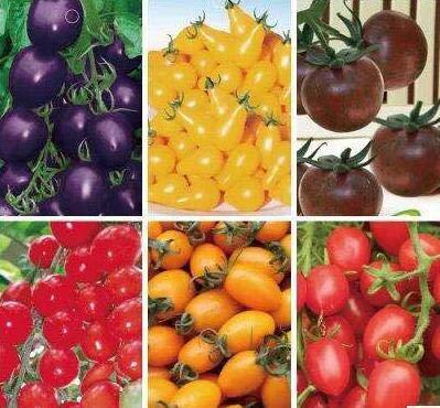 Bloom Green Co. 100pcs Rare Tomate sät Bonsai Bio-Gemüse & amp; Obst Pflanzensamen, Topfpflanze für Heim & amp; Garten Gewächshaus Crop: mix