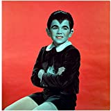 The Munsters 8 X 10 Photo Eddie Munster/Butch Patrick Portrait Sitting Red Background Pose 1 kn