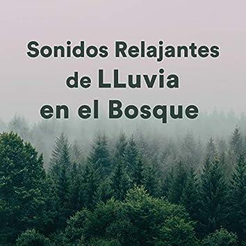 Sonidos Relajantes de Lluvia en el Bosque (Relaxing Forest Rain Sounds)