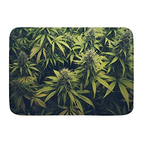 XINGAKA Alfombra de Baño Antideslizante,Hierba Verde Cannabis Bud Marihuana Plantas Marihuana Sativa Cáñamo Indica Cultivo Granja,Absorbente Tapete del Piso de Microfibra de Lavable a Máquina