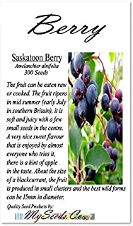 Big Pack - (300) Saskatoon Berry Seeds - Saskatoon Serviceberry - Amelanchier alnifolia Seeds - Saskatoon Berry - Fruit Can Be Eaten Raw Or Cook - Zones 6+ - By MySeeds.Co (Big Pack - Saskatoon Berry)