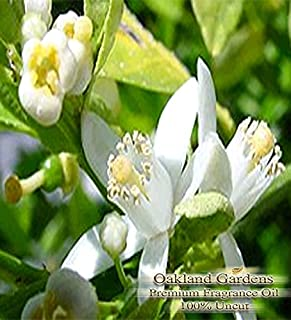 FRENCH LIME BLOSSOM Fragrance Oil - Sweet scent of French lime blossoms with a twist of bergamot and tarragon - By Oakland Gardens