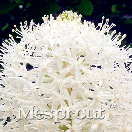 Big Promotion !! 100PCS Ours Semences à gazon Fleur Terrasse Jardin des semences rares