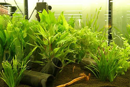 150 Wasserpflanzen XXL Set, Dünger, Aufbereiter - 5