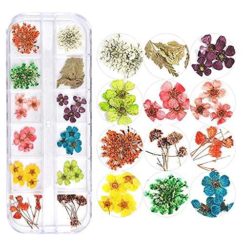 KONGZIR Mischen Sie Farben Getrocknete Blume Compatible with Nagel-Kunst-Dekorationen mischten natürliche Nagel Blumen Trockene Blumen-Verzierungen Maniküre Zubehör (Color : 7)