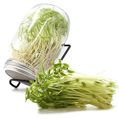 Germoir en Verre, TOCYORIC Germoir pour Graines Sprout Jar, Kit Complet Pour Culture de Graines en Intérieur, Graine Facile à la Maison, Kit de Démarrage Cultivation